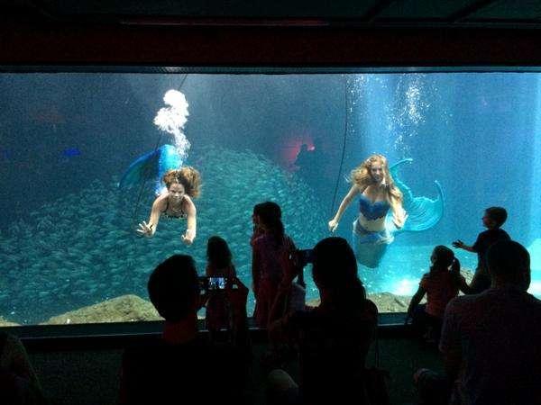Mermaids Take Over the Florida Aquarium